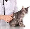 Ветеринарные клиники в Баянголе